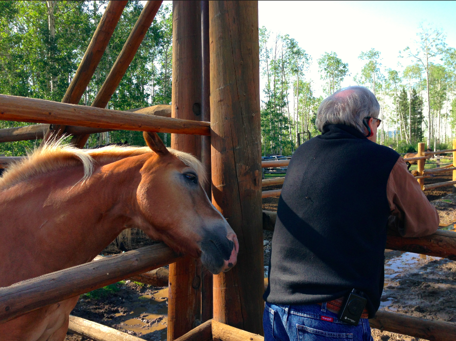 Here is Marvin, the Haflinger, grabbing after Kelly's phone!
