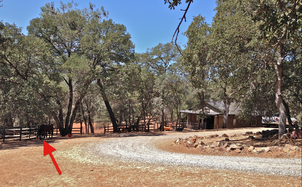 Here is Tess yesterday, she continues to walk across the rock driveway and stroll around the ranch!