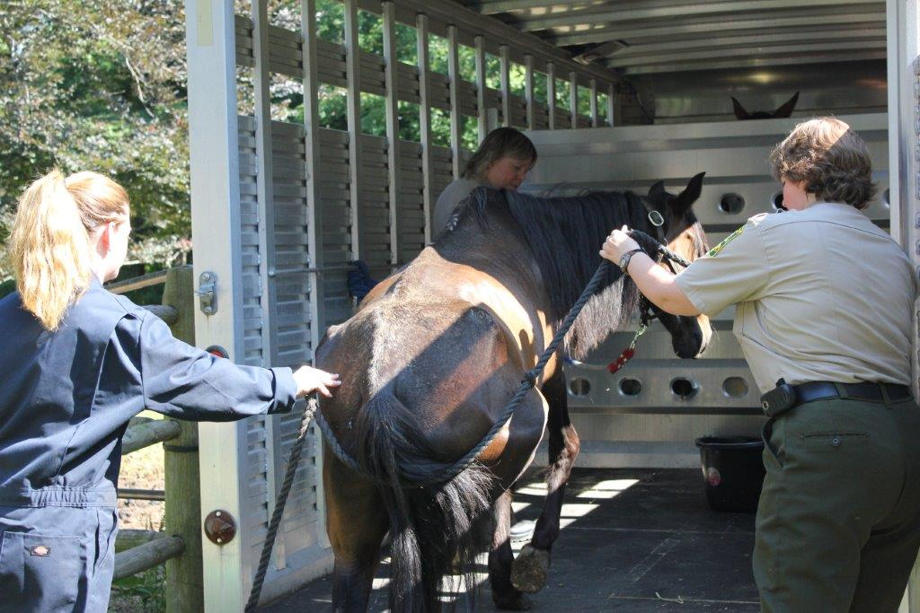 If you missed Monday's post - these girls were so weak, they had to be lifted into the trailers...   Our late August Bucket Fund Mares!