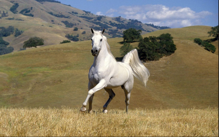 Beautiful horse pic