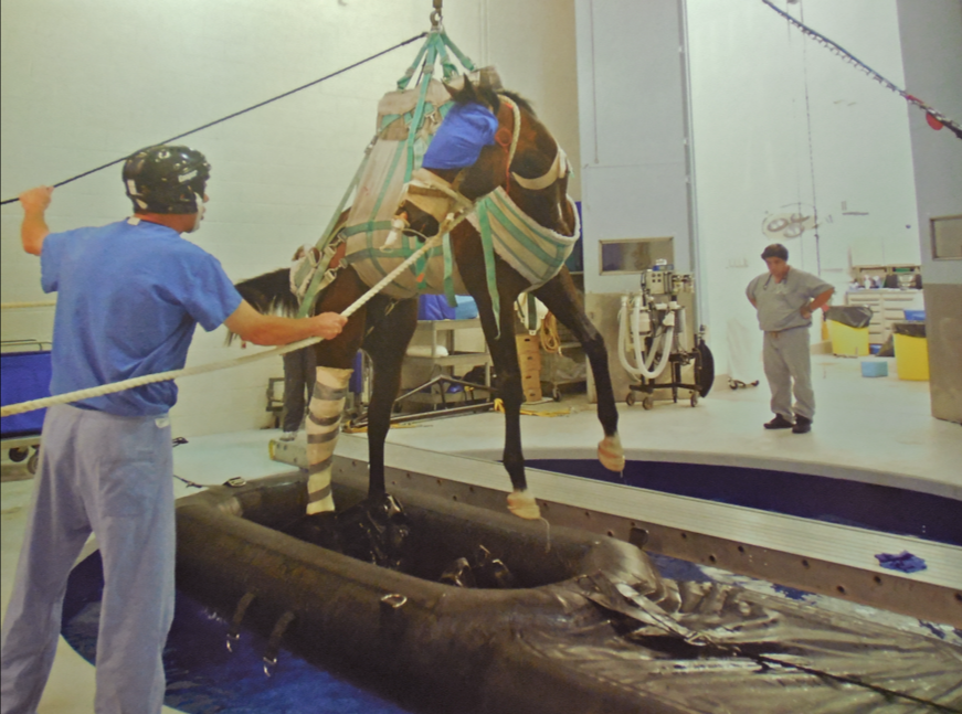 This famous photo of Barbaro coming out of his pool recovery bath...