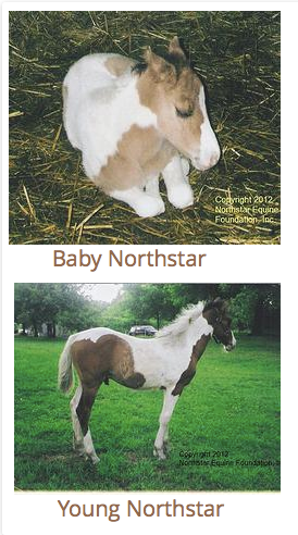 Baby Northstar.   He was born with his owners.  He is part of the family.