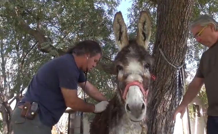 Click image to watch the video of this injured donk's rescue!