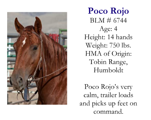 This was my Rojo's brochure photo when he was up for adoption in this program.