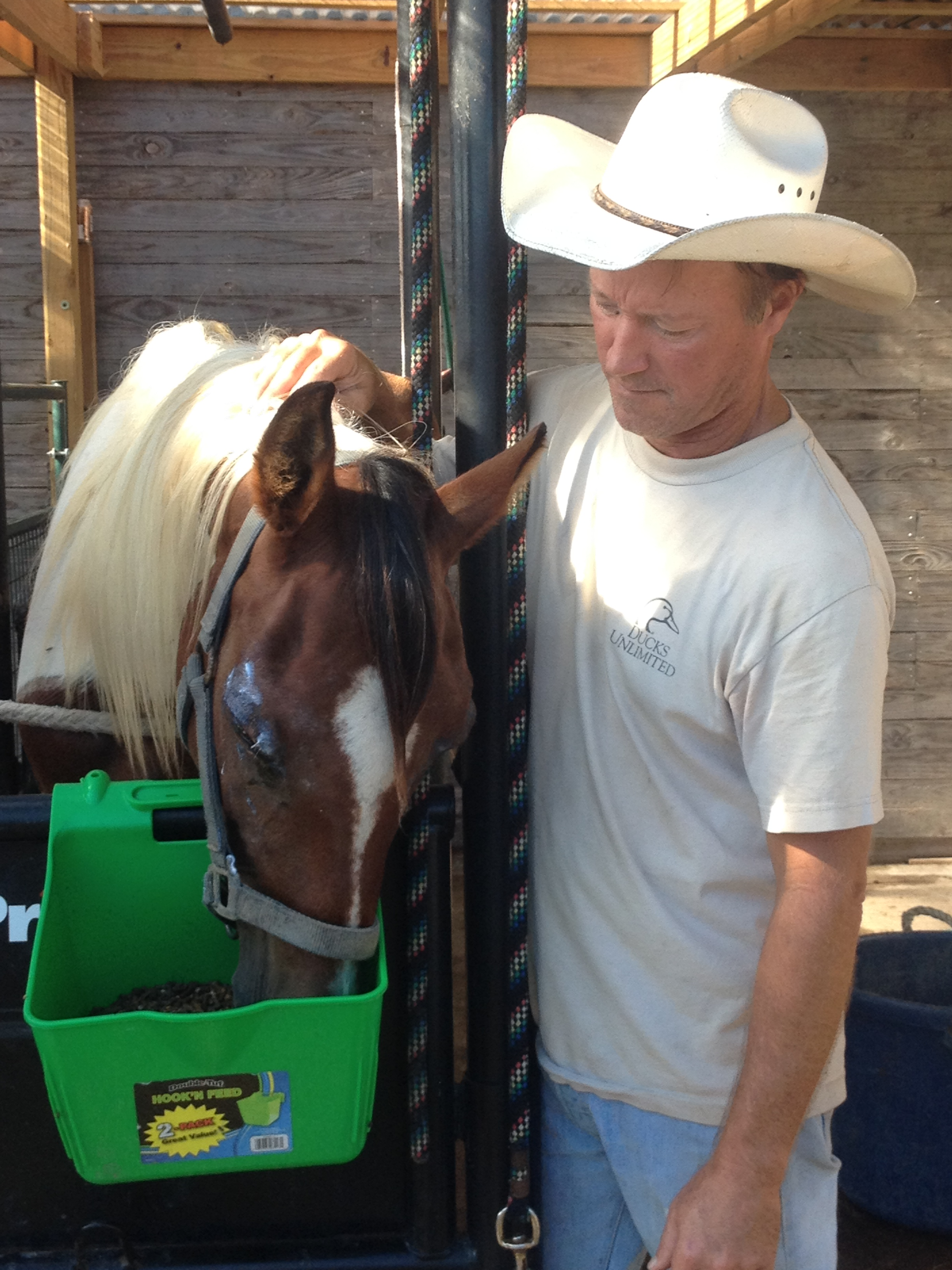 Here she is, receiving tender love and care from John at Rockport Horse Rescue.