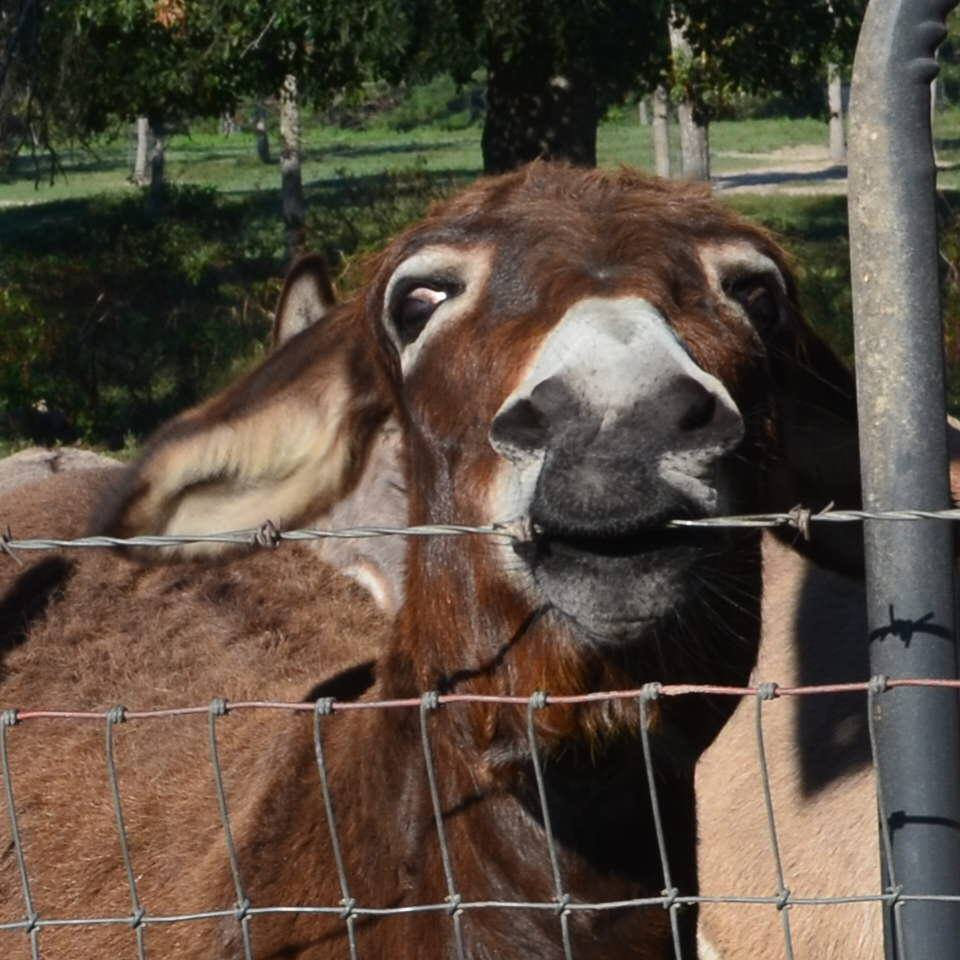 Read about our November Bucket Fund BLM Donks who were saved last minute!  Click here!