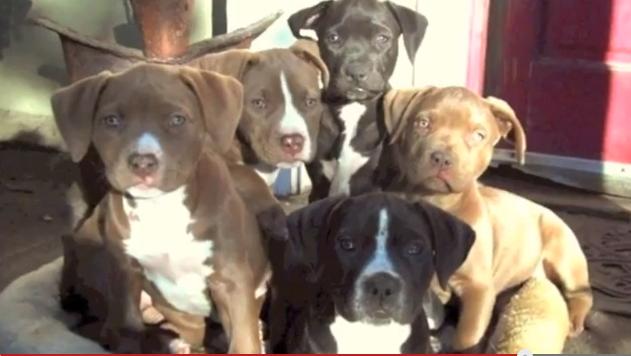 Rosie had 6 babies...