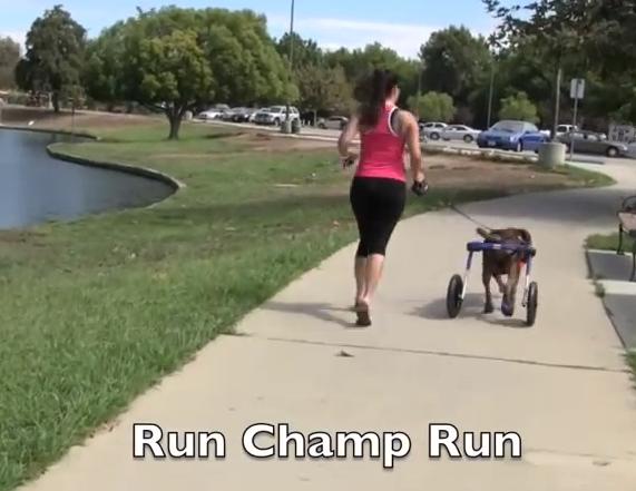 Run, Champ, Run!