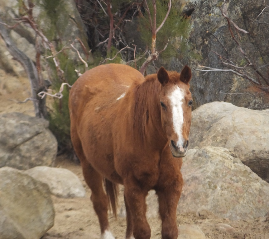 Cinny fat pony