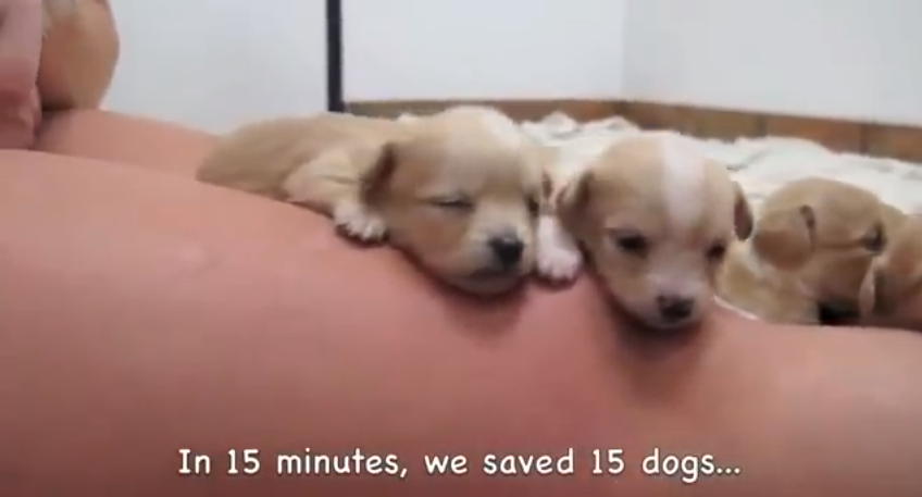 Click image to watch the short, heartwarming video of 15 dogs saved in 15 minutes.