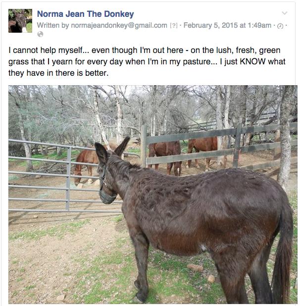 http://www.horseandman.com/daily-donk-2/