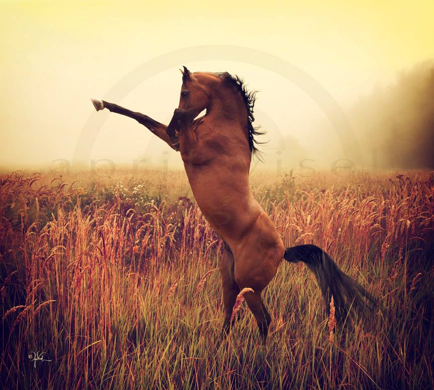 Photo of a wild mustang stallion by April Visel.