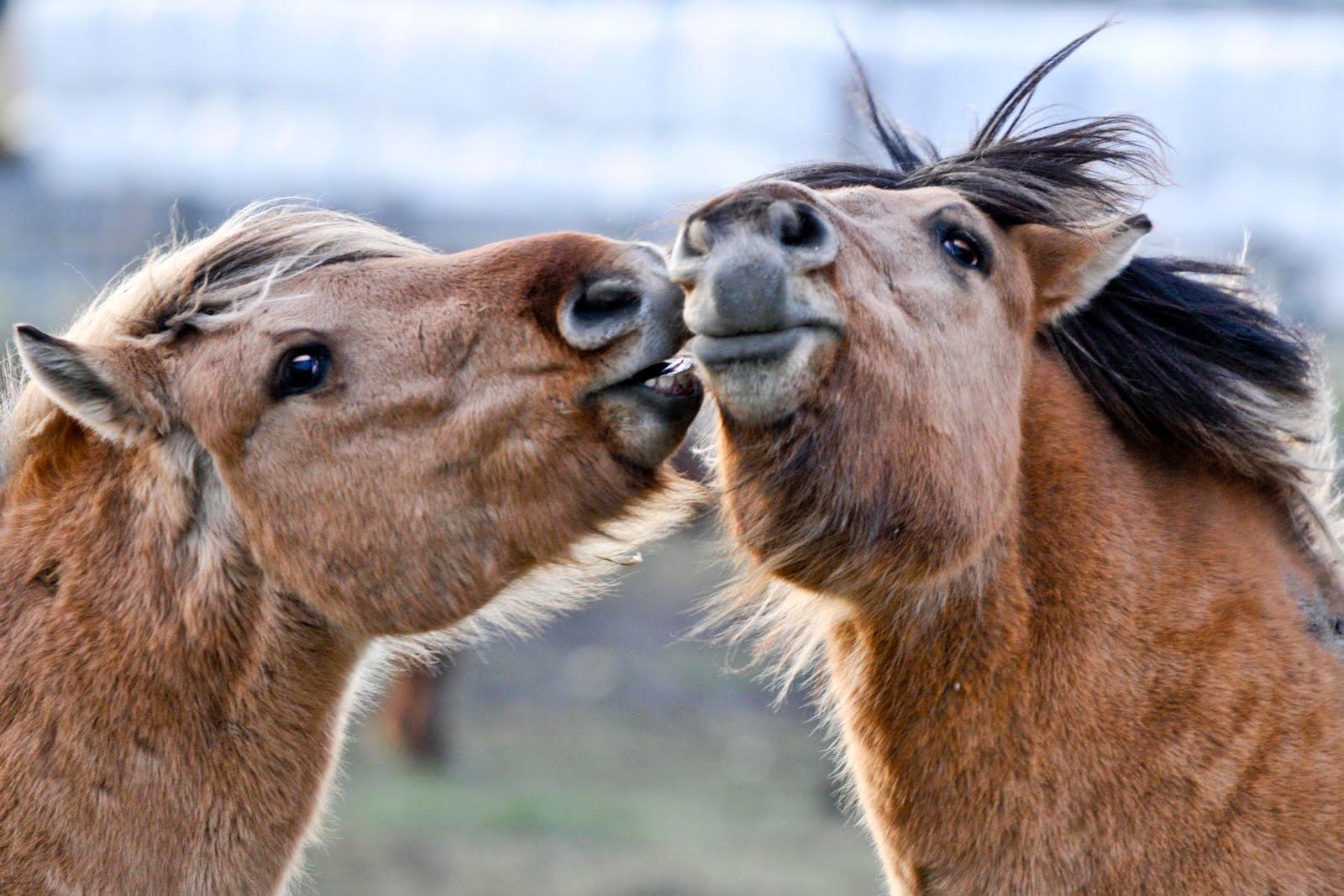 http://www.horseandman.com/?p=34184