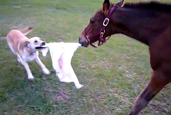 Baby-Horse-Dog-Play-Tag