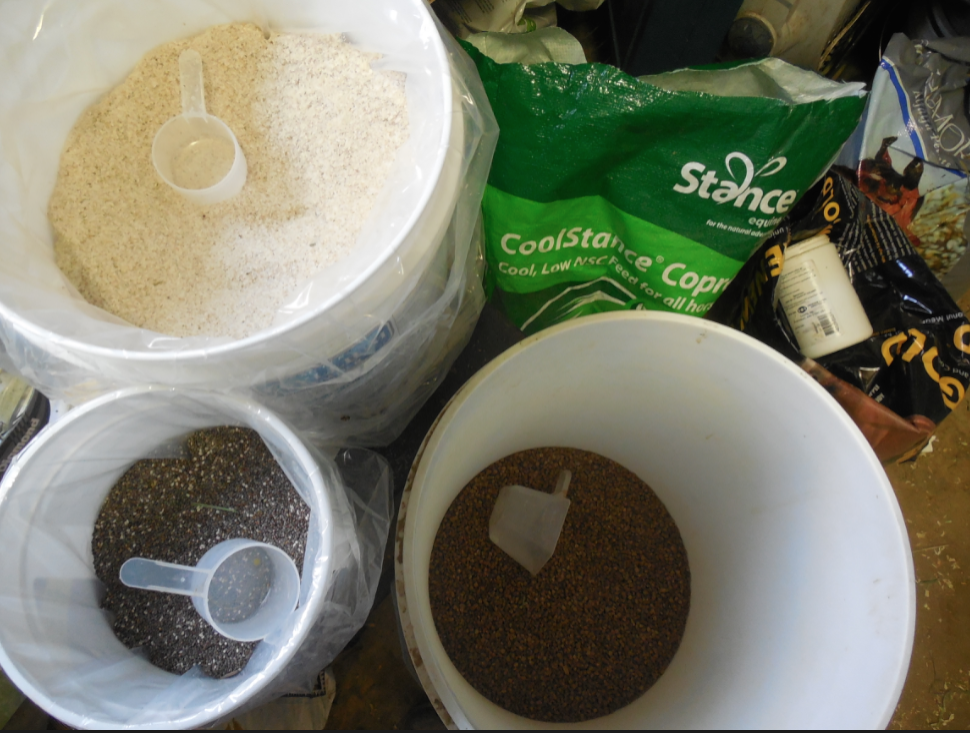 For food, Tess Eats CoolStance, Low Carb Senior, Renew Gold, chia seed, psyllium powder and Enzion Hoof Supplement.