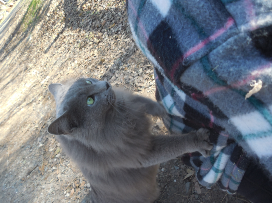 As I'm sitting down, taking my pics of Tess, Fluffy Kitty (the barn cat that wants to be an indoor cat) starts making biscuits on my back.  I  put the camera over my shoulder to take this shot.