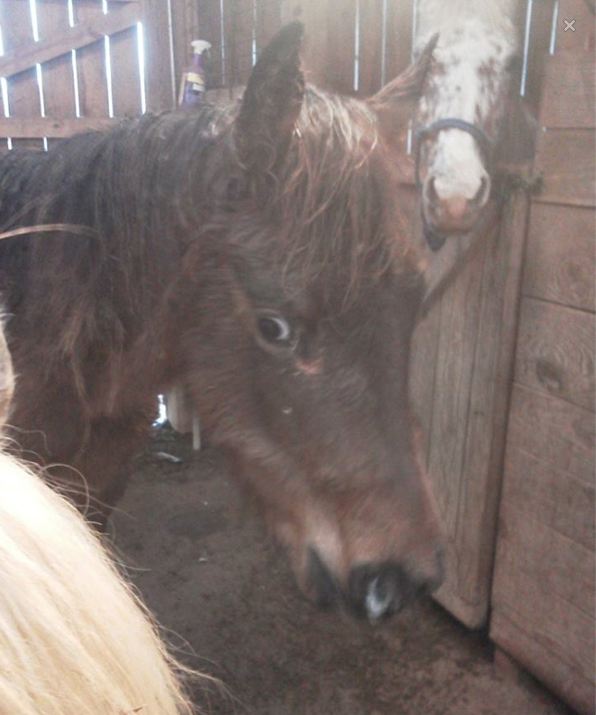 This is the very frightened youngster Appy, Blanket.  He was found with the 25 dead horses in the ravine.