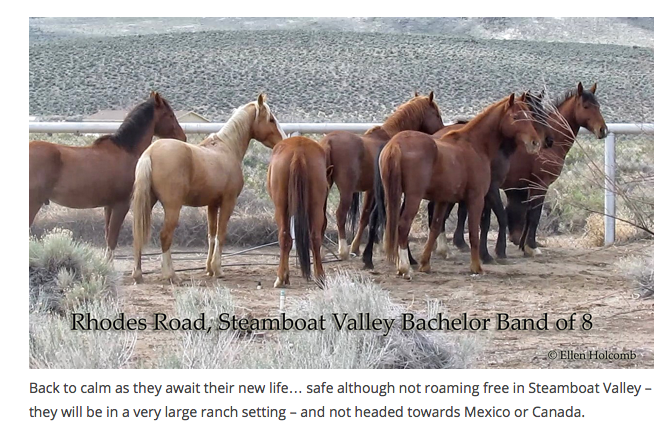They were set free on this very large, private ranch.