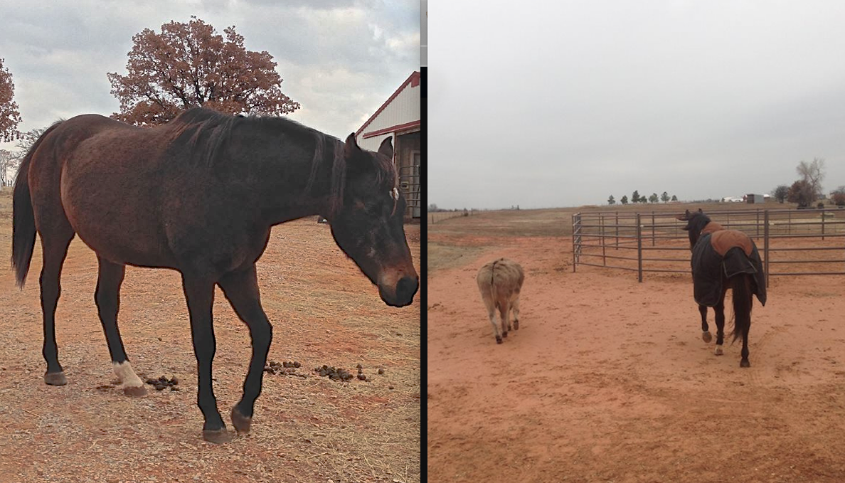 Look how lucky he was to land at Horse Feathers Rescue!!  Click to go to the FB page and see more!