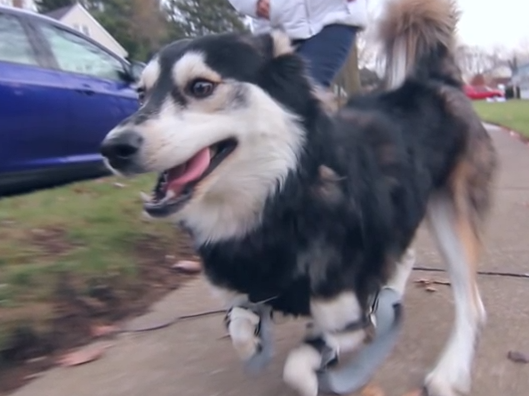 Click to watch the video of Derby running!  Amazing!  They created a perfect design!