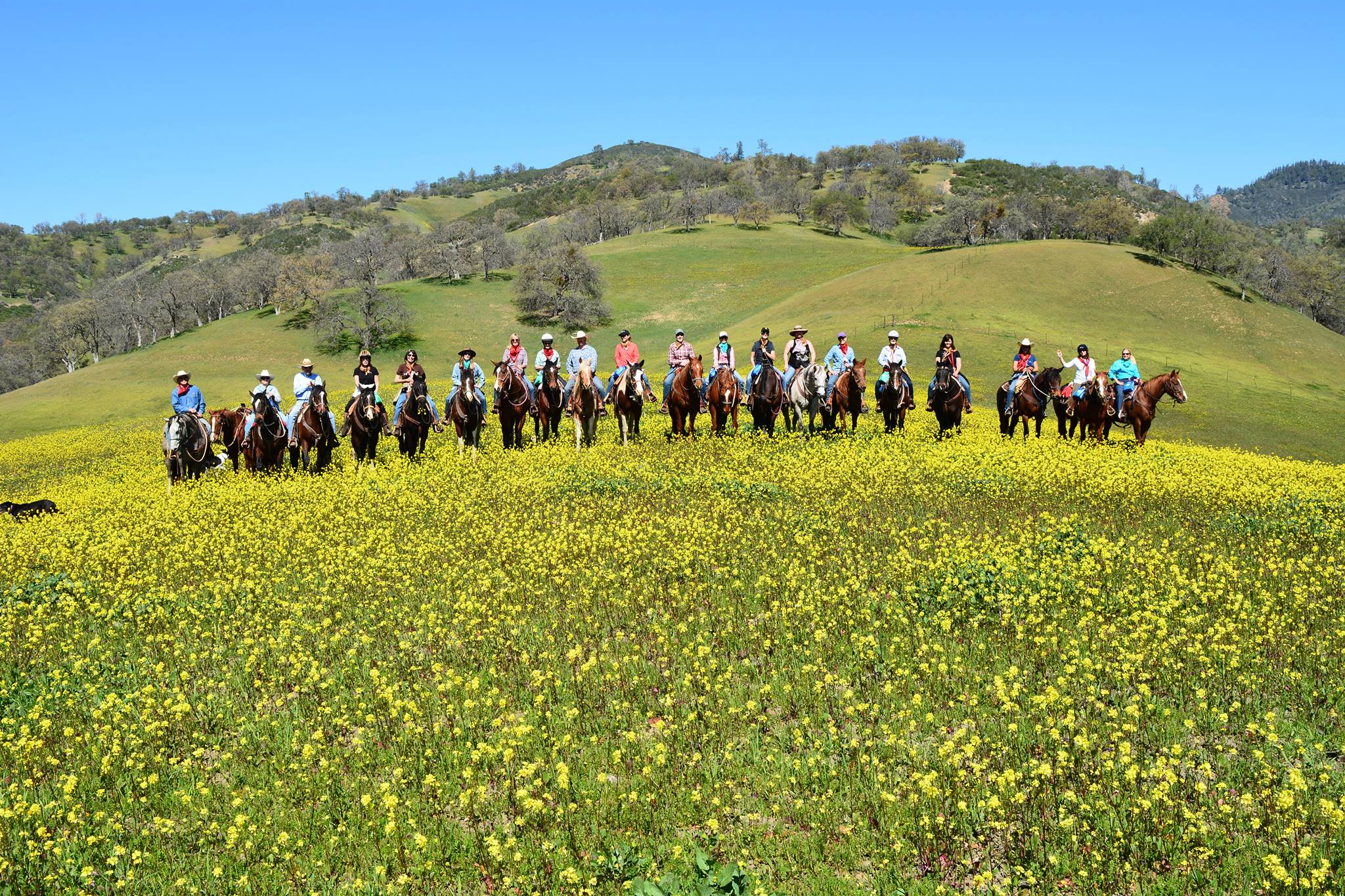 This is a wonderful group shot of all the Wild Weekend particpants on V6 Ranch horses riding on the 20,000 acre V6 cattle ranch in Parkfield, CA.  I'm the one waving.
