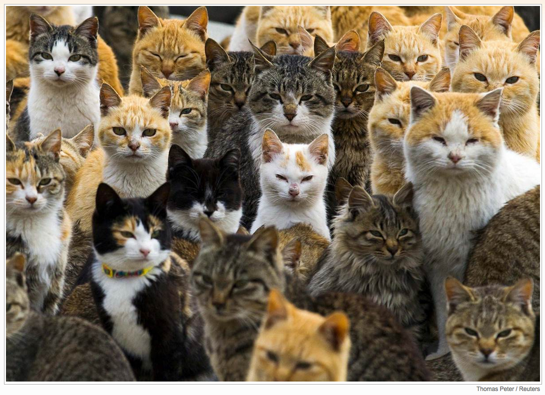 Cats crowd the harbor on Aoshima Island in southern Japan, on Feb. 25. An army of cats rules the remote island, curling up in abandoned houses or strutting about in a fishing village that is overrun with felines outnumbering humans six to one.