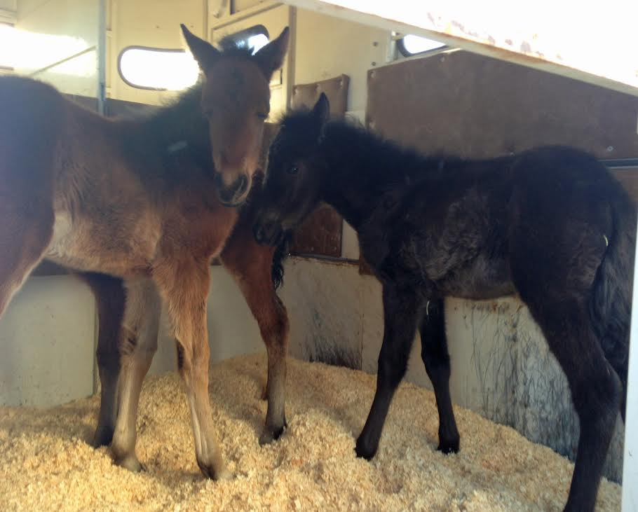 Here is a quick photo of the babies inside the trailer, on their way to safety!