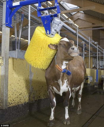 Mechanical cow brushes... kind of like a car wash.  Does anyone have these for horses?