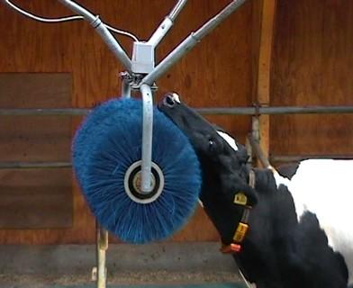 rotating-cattlebrush-392x320