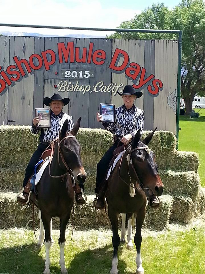 This is my good friend, Bonnie Easley, who is right now at Bishop Mule Days. They won best matched pair in the opening parade!  She is on her mule, Fancy.  And indeed she is a fancy mule (left)!