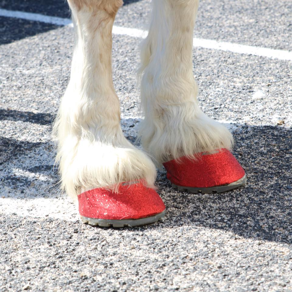 """HOOF BLING! """"HOOFIES"""" - 8 hours of glory for your horse's ..."""