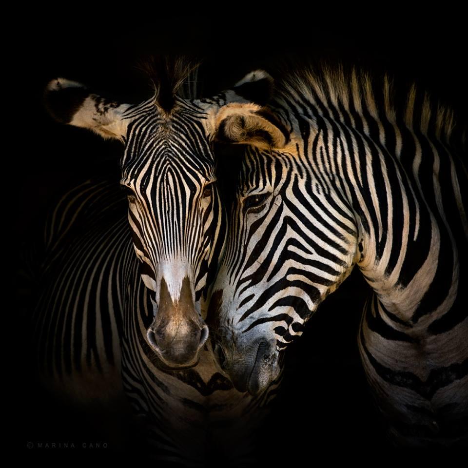 Marina Cano Wildlife Photographer