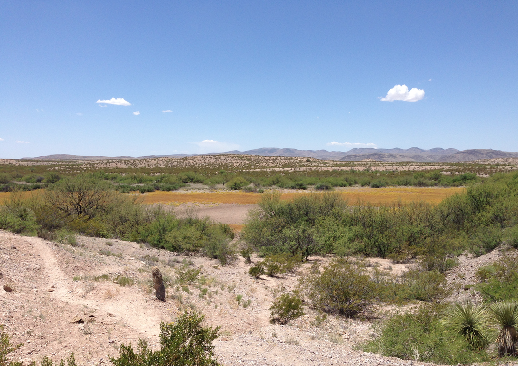 We were standing on top of a dam they had built to create a 'dirt tank' (we call them 'ponds').  Alan was a bit sad that the mesquite was so prevalent now... he said this area was covered in grass when they owned the land.