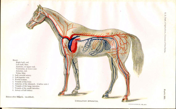 Liquid coq10 for laminitic horses have you tried it horse and man il570xn281332051 ccuart Images