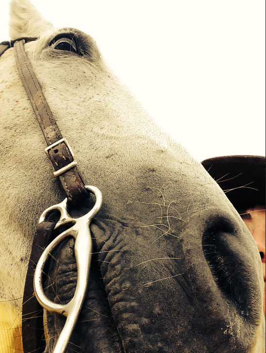 My arms weren't long enough to get a good selfie of my horse in Wyoming...