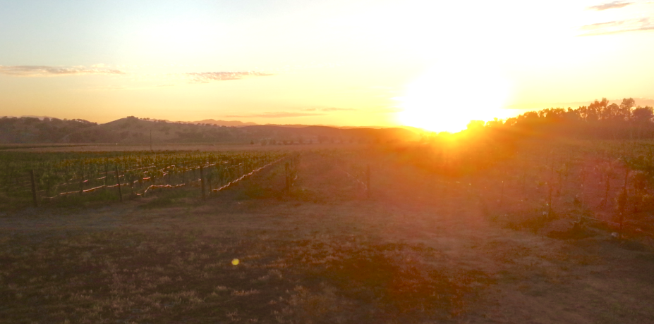 This is a little difficult to decipher but it is Hubby's view from his cottage porch - the sunset over the vineyards. Thank you, readers, for helping him find this dream situation!