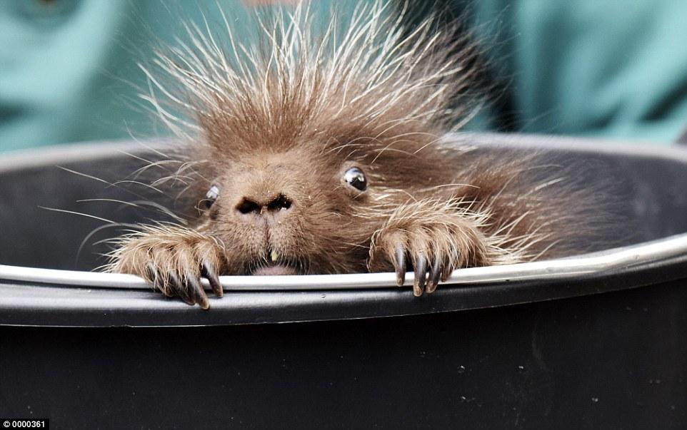 kevin born at Hagenback Zoo