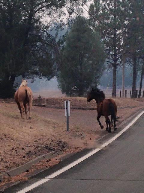 The fires are moving so fast, people have had to let their animals loose to fend for themselves.