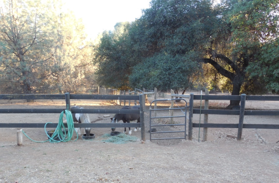 "The ponies refused to go into the larger pasture for breakfast. They stood here. ""We want to live in here and eat right here."" So, I shut the gate between them and the ponies were happy."