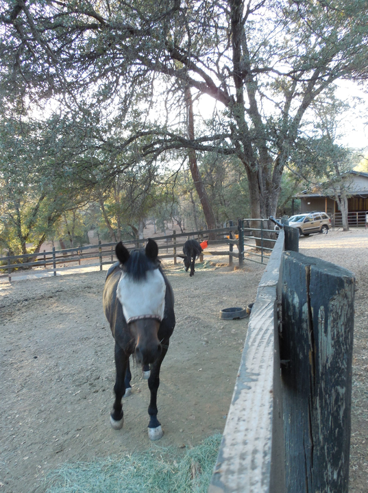 Gwen was very excited to be the dominant mare in the new pasture. And, she could eat in peace!