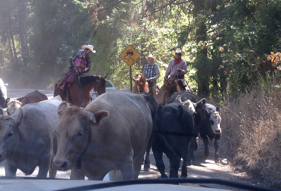 This was the last photo I took... I was busy looking at these people and their horses. It definitely seemed like an annual or bi annual cattle drive. Could this be? Do they use the highway like this often? Everyone looked to be having a very relaxed and good time... Wow!