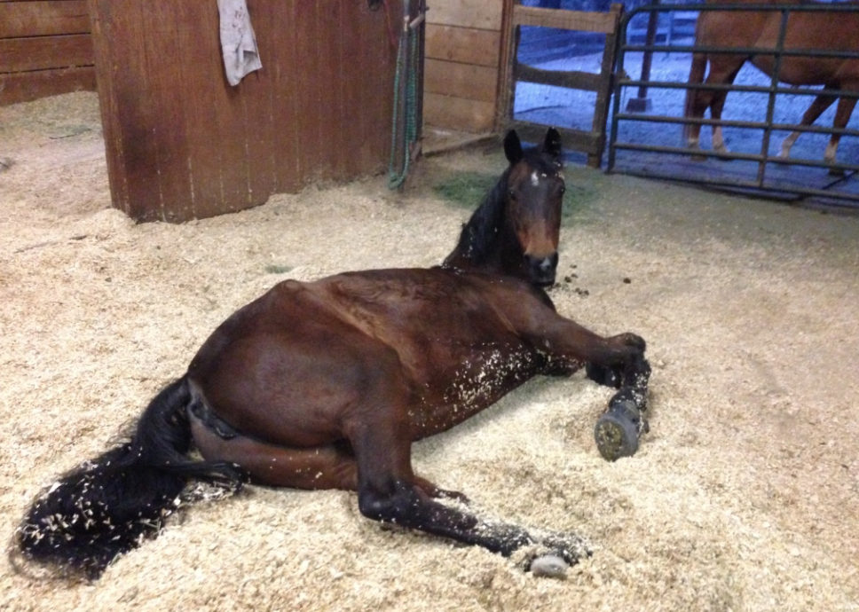 She was snoozing when I came back into the barn... but she got up, hoping I would give her a treat.