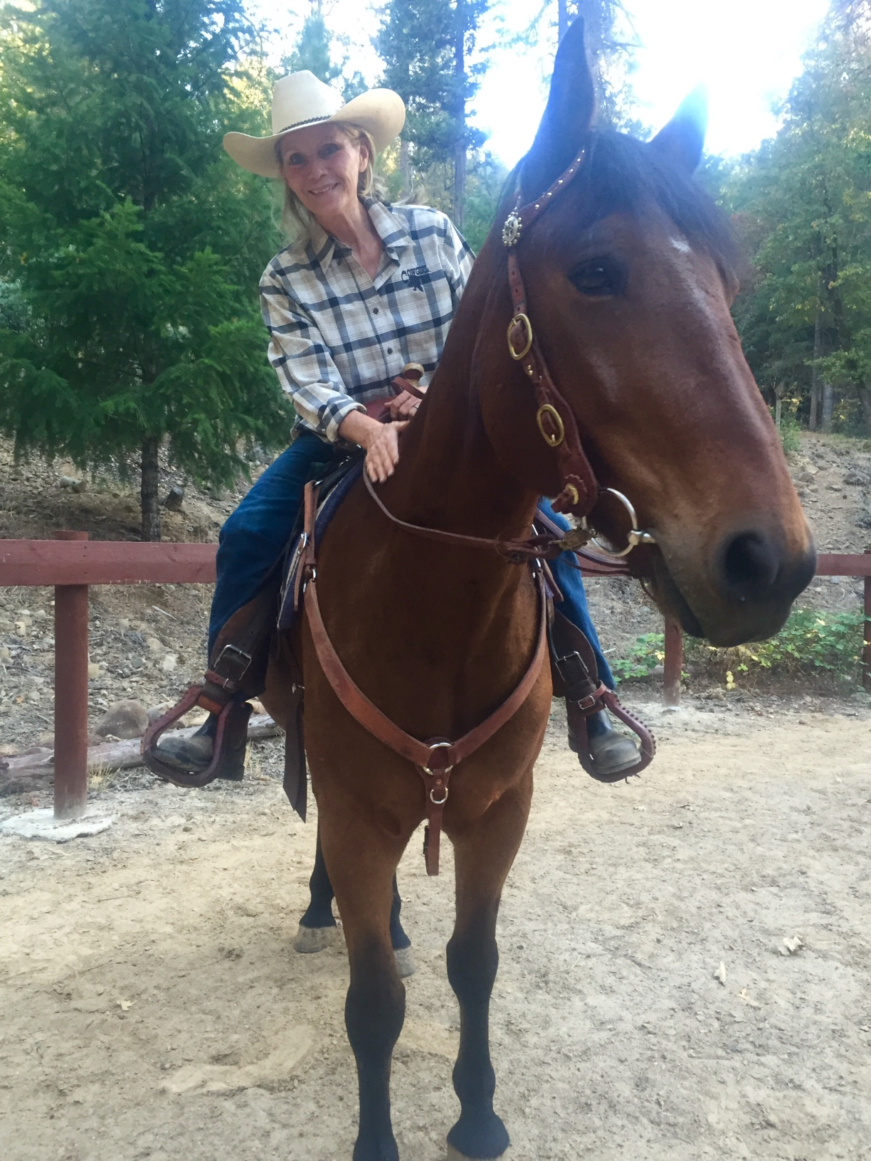 relationship new horse