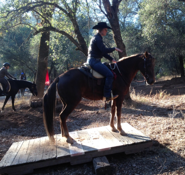 This is my horse, BG, who is hot, excitable, minimally trained and claustraphobic - standing comfortable still on a rocking teeter totter, after about 1 minute of coaxing from Wylene. Yup. I had a bit to learn... But she never made me feel anything but confidence.