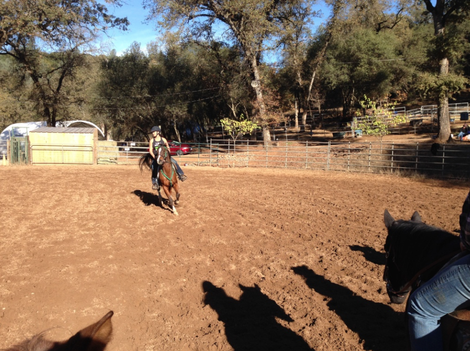 This was a very beautiful and athletic Arab endurance horse trying to master the rhythm and cadence of these turns.