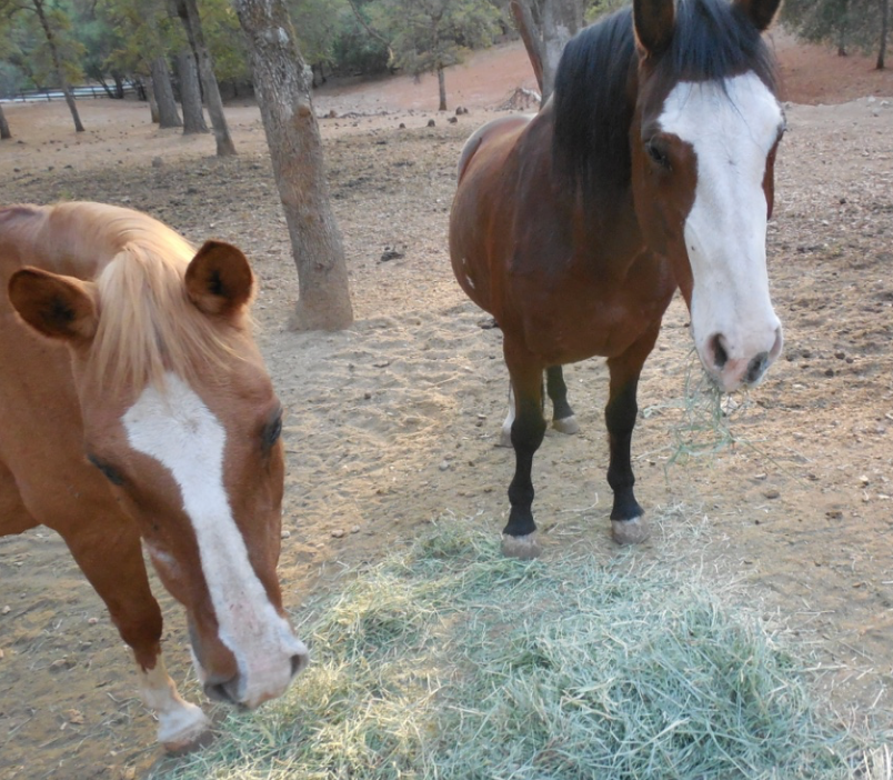 This is Sam and Remi... Rojo was just to the left. These three formerly wild mustangs have a great life!