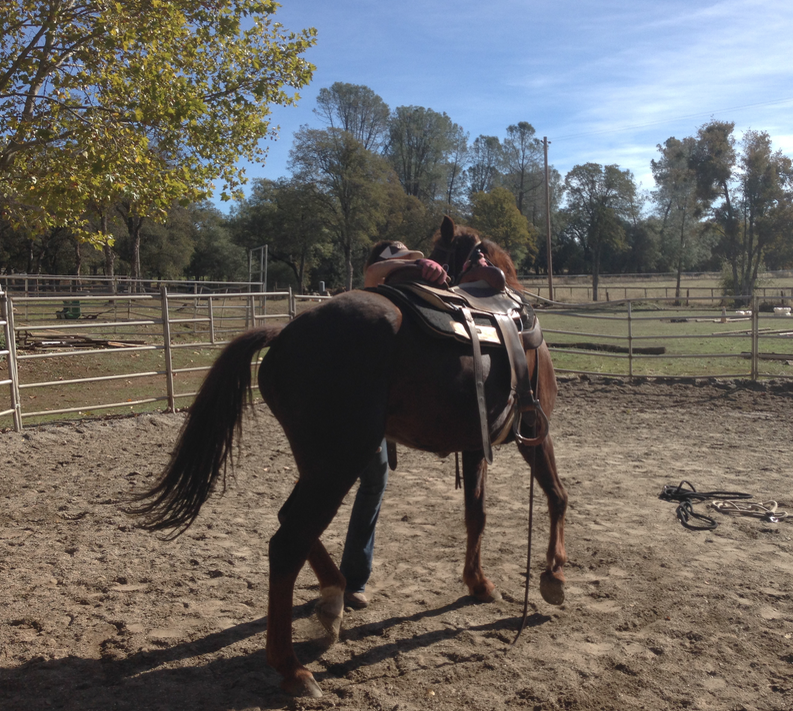 Jerily had him saddled and did all kinds of ground work with him... and then she said, He's ready!