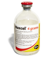Naxcel powder. The base for the injections.