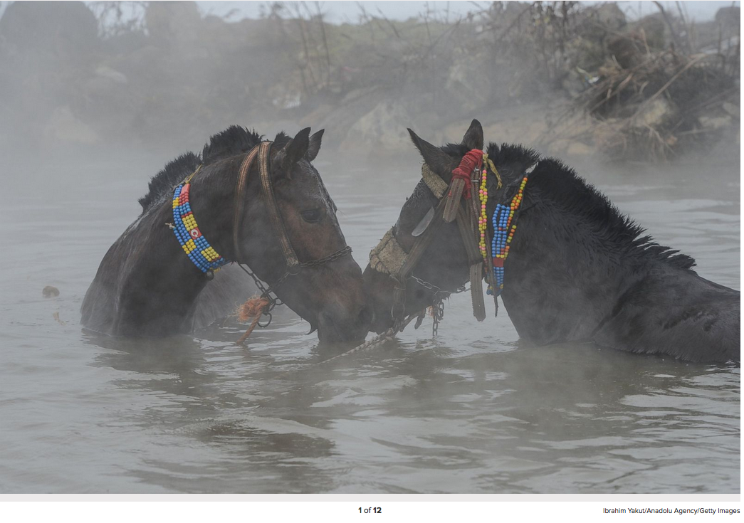 Horses are seenin a thermal spring in the village of Budakli in Guroymak district