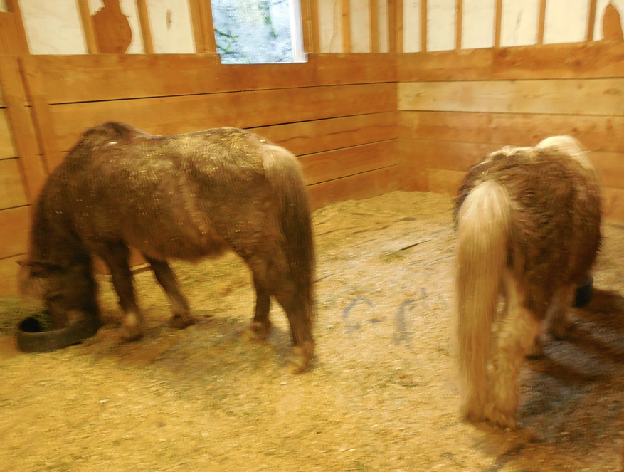 They will walk themselves into the stall so I can lock them in while I feed the others - as long as I feed them first.